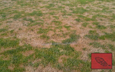 Treating Fairy Ring Lawn Disease